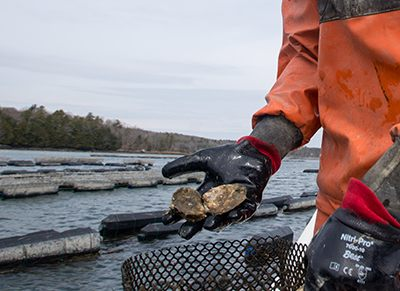 UNH Receives $700k for Aquaculture Project