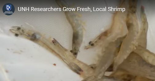 Hyperlocal Shrimp?